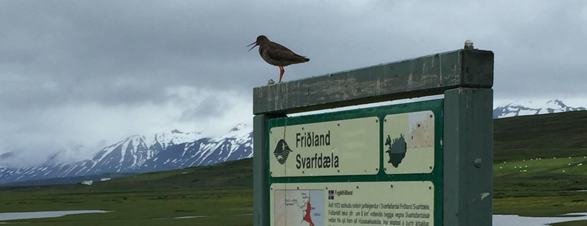 28 jun : de Akureyri à Dalvik