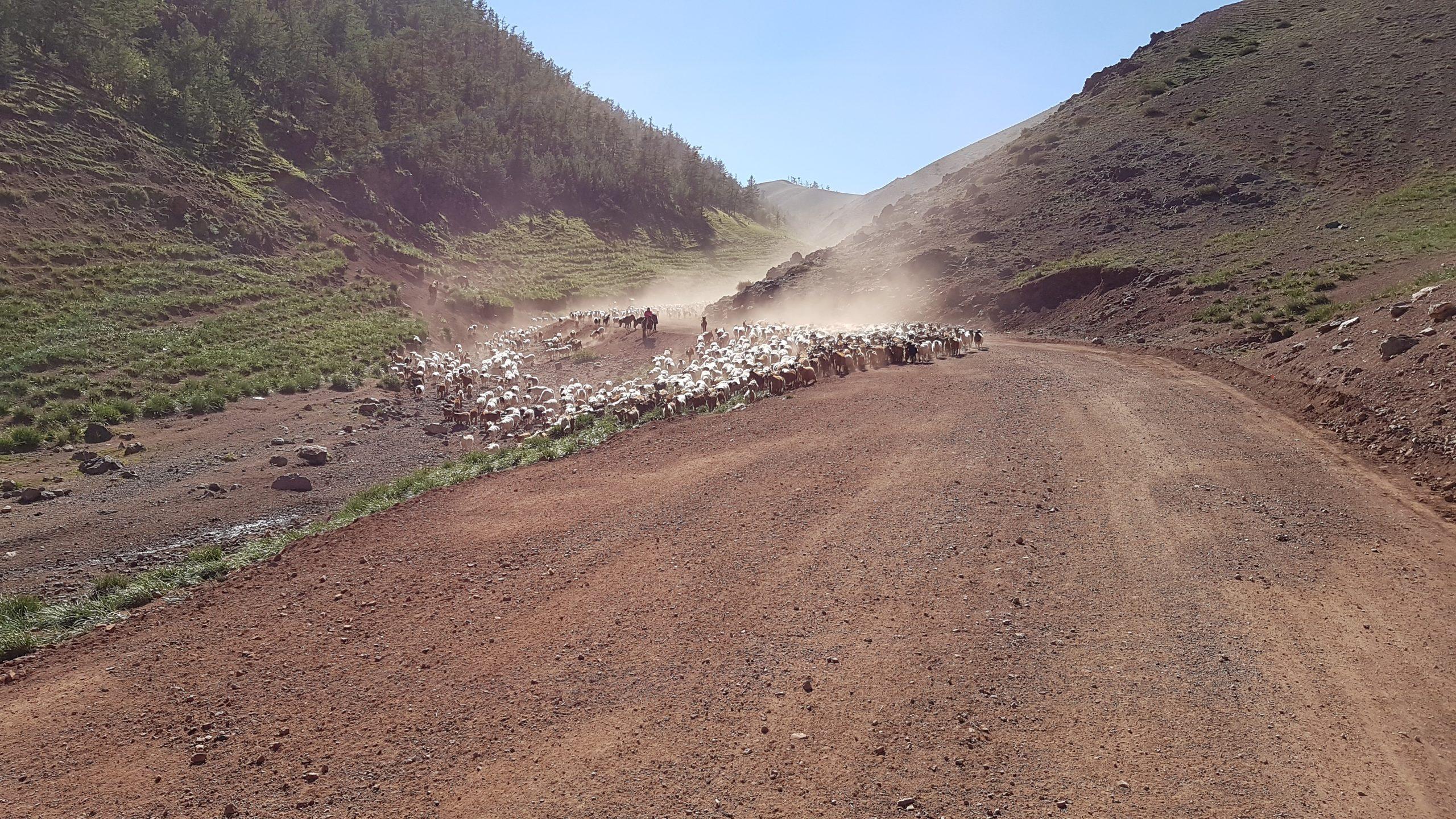 16 août : Vers le col Ulaan Davaa