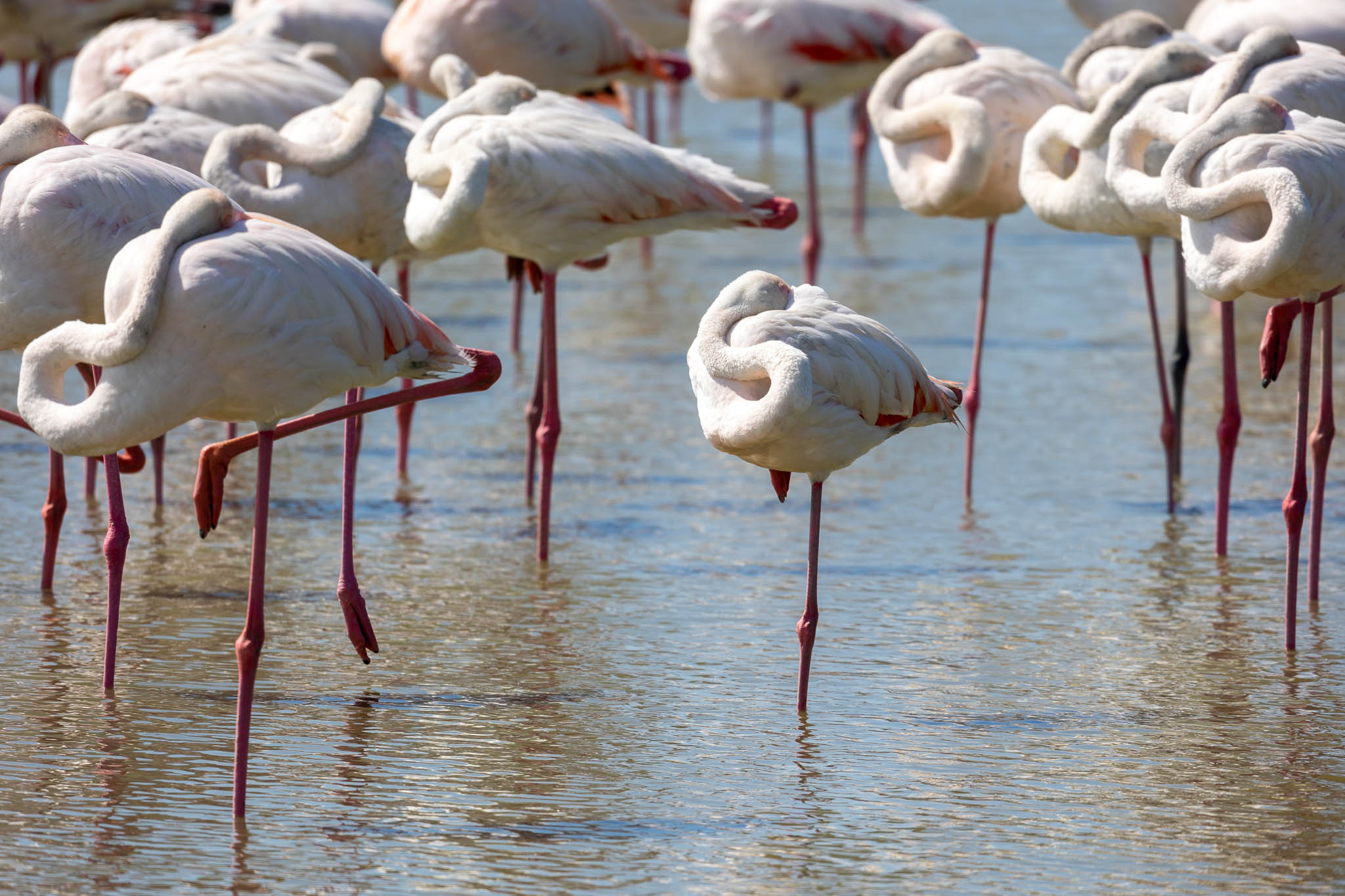 12 juin : Parc ornithologique du Pont de Gau